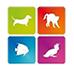 Интернет магазин товаров для животных www.petshopspb.ru